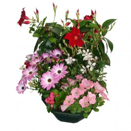 Choisissez votre composition de plantes